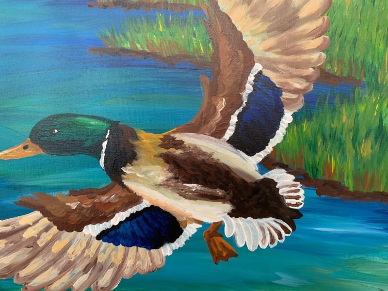6:30 In Studio | Duck in Flight