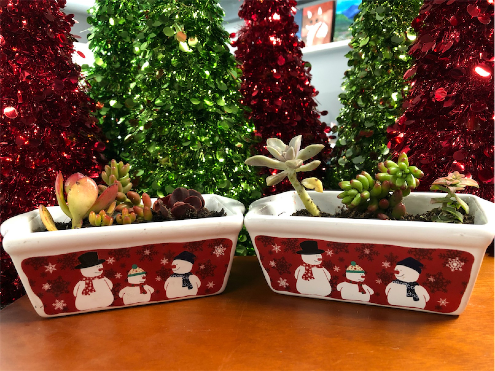 Take Home Holiday Succulent Workshop